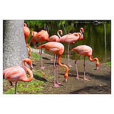Flamingo Photo Art