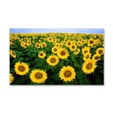 Sunflowers in field Car Magnet 20 x 12