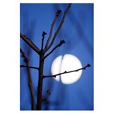 Moonlit Twig 11x17