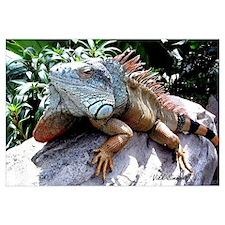 Iguana Talk!
