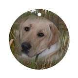 Labrador In Wetland Ornament (Round)