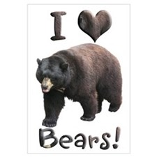 Helaine's American Black Bear
