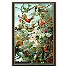 """Hummingbird Print"""