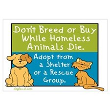 Adopt Shelter Rescue