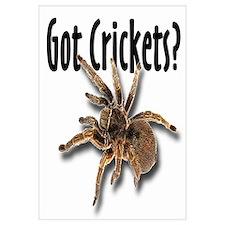 Tarantula Got Crickets
