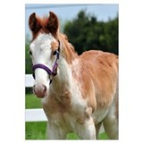 Strawberry Roan Foal