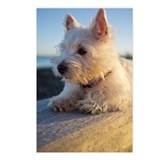 Westie Postcards (Package of 8)