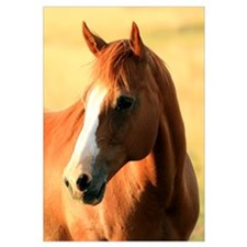 Horse ,1,