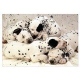 DALMATION PUPPY PILE