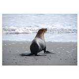 Cute Sea mammals Wall Art