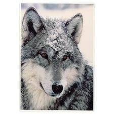 """""""Wolf"""" 9x12"""