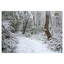 Chesapeake Arboretum 01 06 calendar 16x20 print