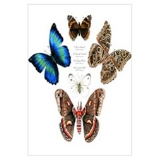 Butterfly and Moth Sampler