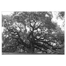 (Angel Oak)