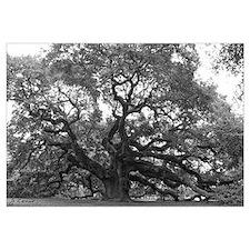 (Angel Oak)