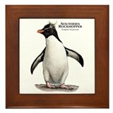 Southern Rockhopper Penguin Framed Tile