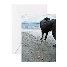 Flat-coated Retriever & Starfish Cards (Pk of