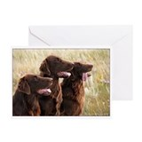 Liver Trio Flat-coated Retriever Cards (Pk of 20)