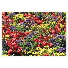 Helaine's Confetti Flowers