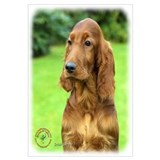 Irish Setter 9T004D-349