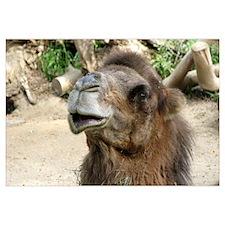 Helaine's Camel