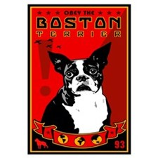 Obey the Boston Terrier! 1