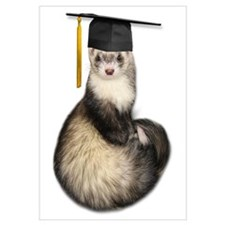Ferret Graduation