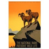1930s Vintage Preserve Wildlife WPA Small P