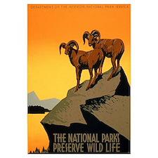 1930s Vintage Preserve Wildlife WPA Small P