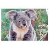 SMILING KOALA BEAR