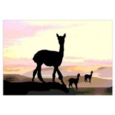 Sunset Hills Alpacas