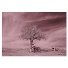 Funny Infrared Wall Art