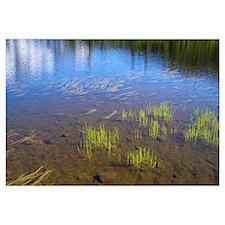 Picture Lake Grasses