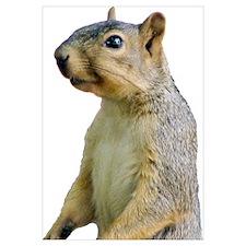 Cute Squirrel Wall Art