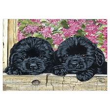 Cute Black newfoundland Wall Art