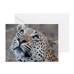 Leopard Portrait Greeting Cards (Pk of 20)