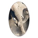 Elephant Dust Bath Sticker (Oval 50 pk)