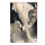 Elephant Dust Bath Postcards (Package of 8)