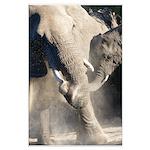 Elephant Dust Bath Large Poster