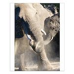 Elephant Dust Bath Small Poster