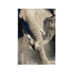 Elephant Dust Bath Rectangle Magnet (100 pack)