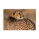 Cheetah Mini Poster Print