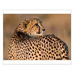 Cheetah Small Poster