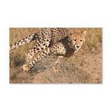 Cheetah On The Move 22x14 Wall Peel