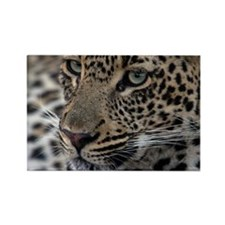 Leopard Portrait Rectangle Magnet (10 pack)