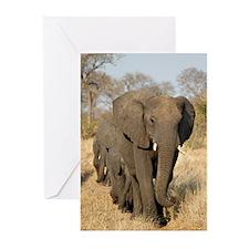 Elephants Stroll Greeting Cards (Pk of 20)