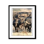Buffalo Stare Down Framed Panel Print