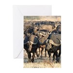 Buffalo Stare Down Greeting Cards (Pk of 10)