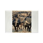 Buffalo Stare Down Rectangle Magnet (100 pack)