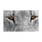 Lion Eyes 38.5 x 24.5 Wall Peel